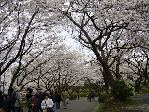 20060402_springfestival-1.jpg